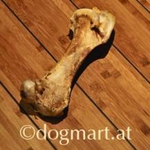 Strauß Oberkeulenknochen